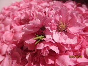 花びら3.JPG